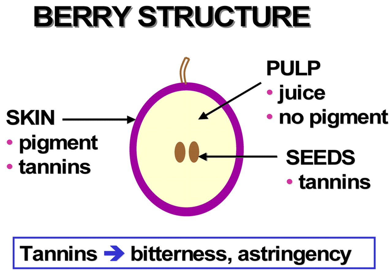 Phenolics And Ripening In Grape Berries