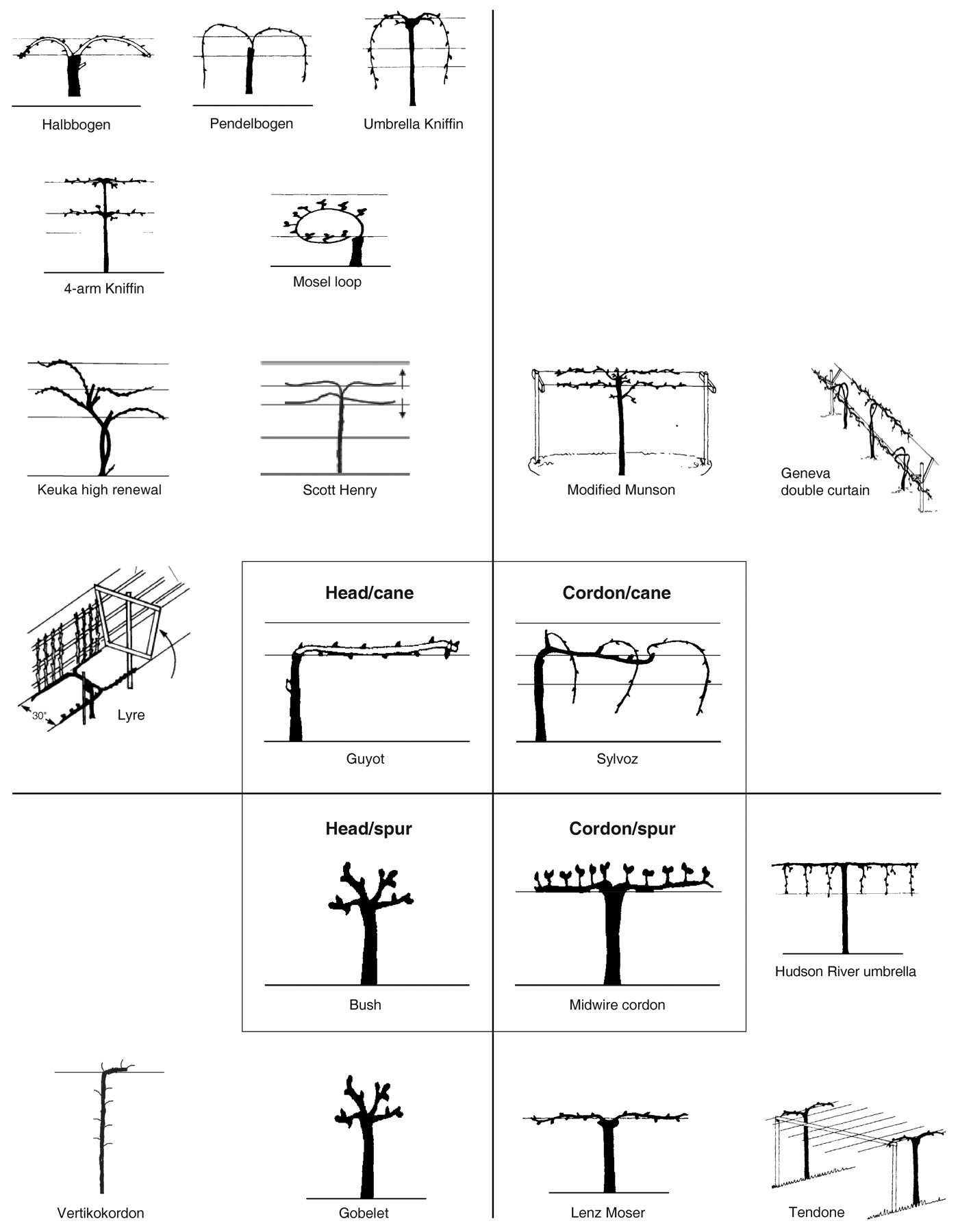 Build A Garden Trellis Influence Of Grapevine Training Systems On Vine Growth And