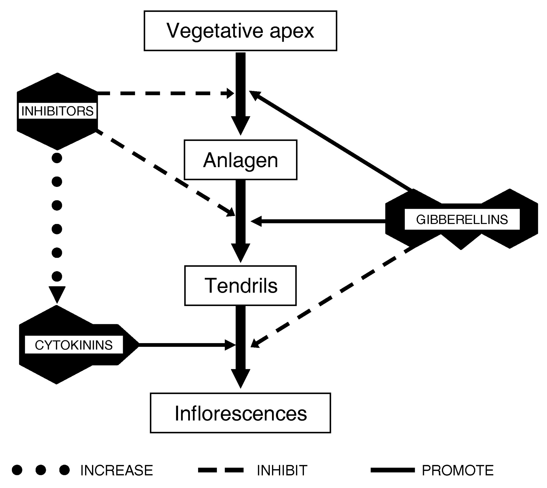 The Flowering Process Of Vitis Vinifera A Review American Journal 2002 Lincoln Ls Trunk Fuse Diagram Back Download Figure