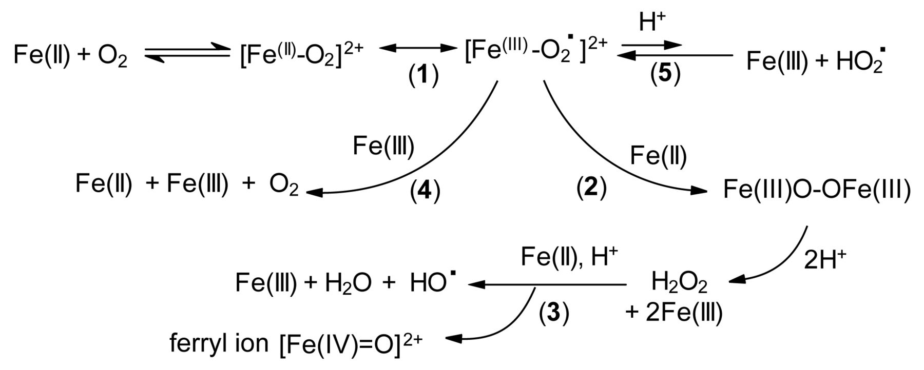 Reactions Involving Iron In Mediating Catechol Oxidation In Model